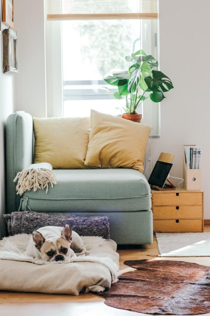 Como limpar seu sofá de tecido - um meio eficaz de limpar seus animais domésticos de limpeza e o sofá