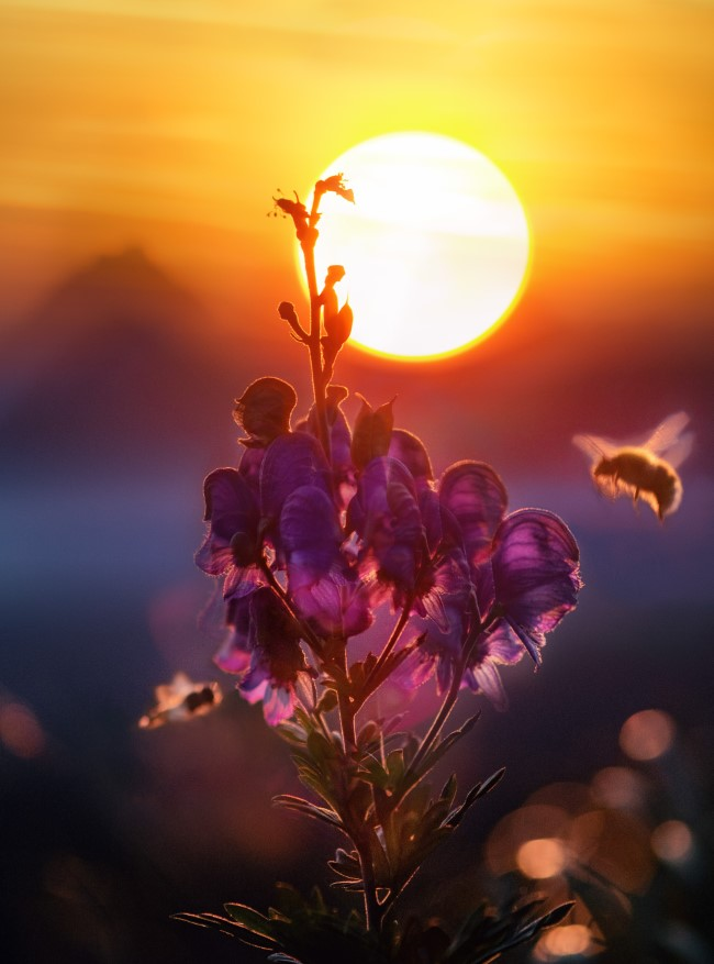 Top 10 bienenfreundliche Herbstblumen für Garten und Balkon bienen im herbst