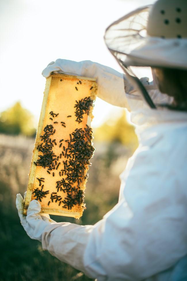 Top 10 bienenfreundliche Herbstblumen für Garten und Balkon imker retten die bienen