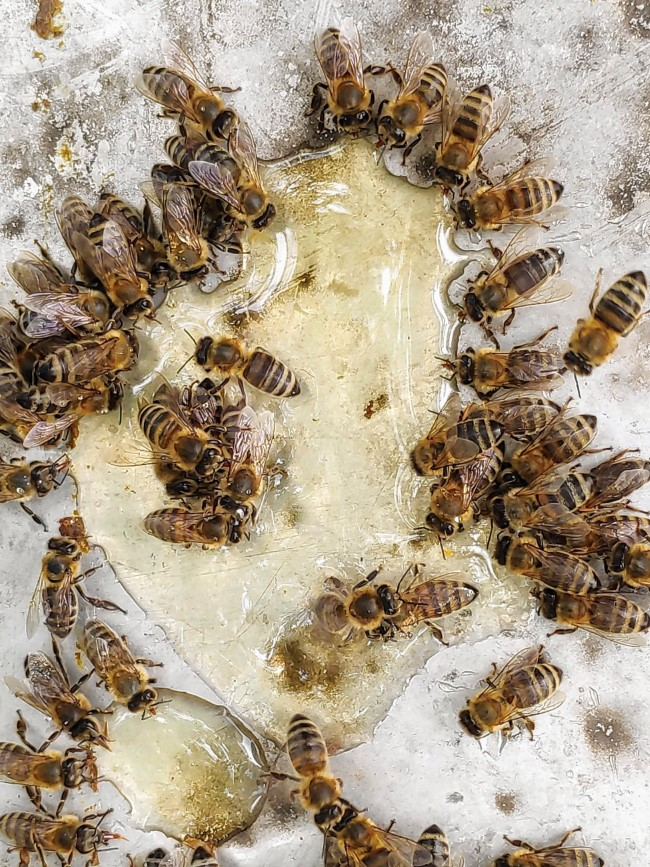 Top 10 bienenfreundliche Herbstblumen für Garten und Balkon zuckersirup honig futter