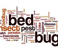 Wie kann man Bettwanzen bekämpfen und gibt es Hausmittel, die dabei helfen?