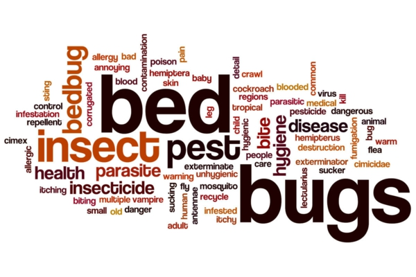 Was tun gegen Bettwanzen