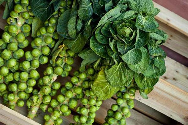 Was wird im September gepflanzt - 10 Gemüsesorten für Ihren Herbstgarten Rosenkohl