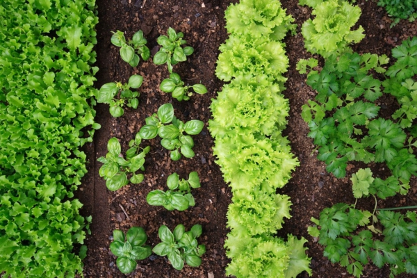 Was wird im September gepflanzt - 10 Gemüsesorten für Ihren Herbstgarten