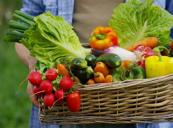 Was wird im September gepflanzt - 10 Gemüsesorten