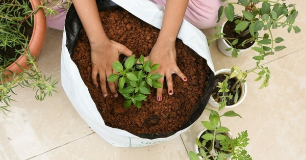 Was wird im September gepflanzt Gemüsesorten für den Herbstgarten