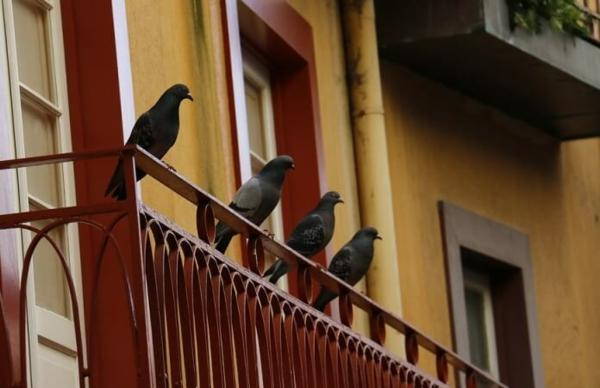 Wie kann man Tauben aus dem Balkon verjagen