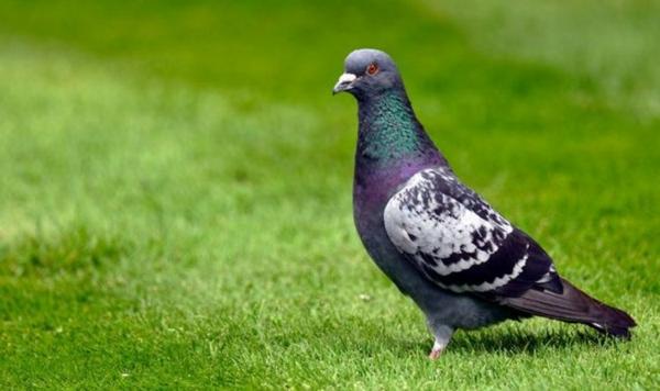 Wie kann man Tauben verjagen - 6 effektive Methoden dafür