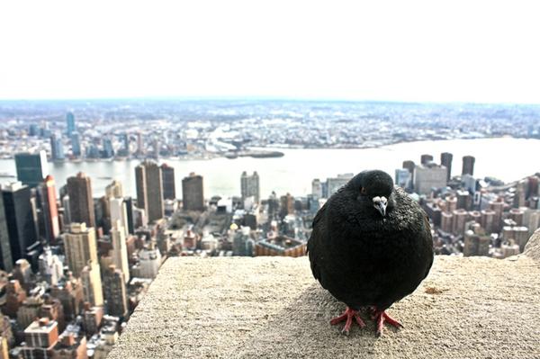 Wie kann man Tauben verjagen Stadtleben