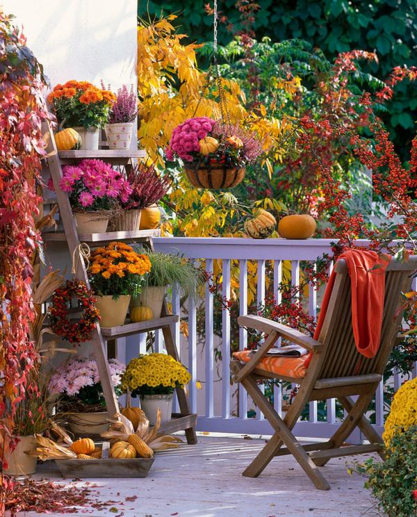 chrysanthemen herbstblumen balkon