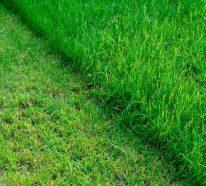 Grasmilben bekämpfen – was hilft gegen die Plagegeister und was man bei Bissen machen sollte