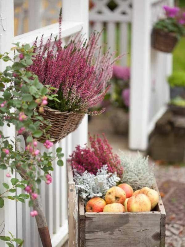 heidekraut herbstblumen tipps