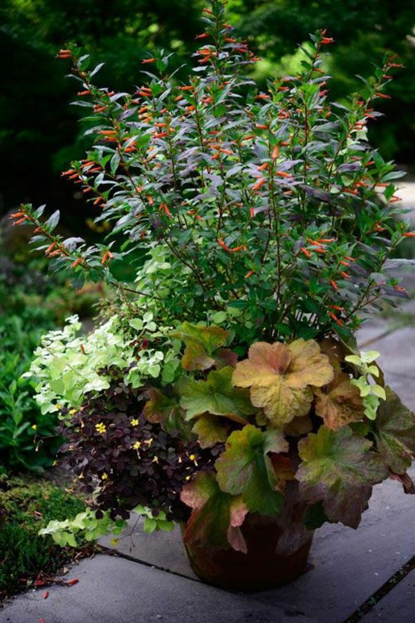 herbstbepflanzung Fledermausgesicht Strohblume Sauerklee Purpurglöckchen