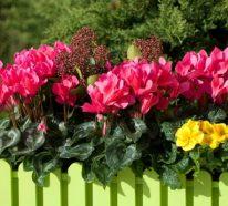 Herbstbepflanzung Balkon – Schöne Ideen für prachtvolle Balkongestaltung
