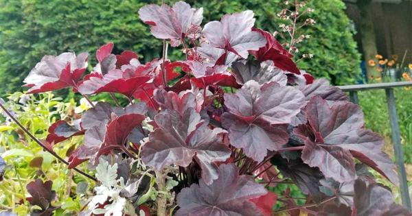 herbstbepflanzung balkon passende pflanzen auswählen heuchera purpurglöckchen