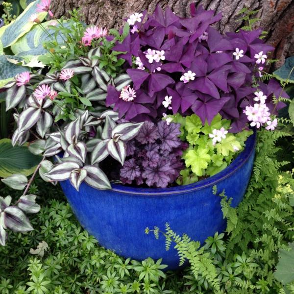 herbstbepflanzung pflanzen schöne blätter kleine blüten akzente