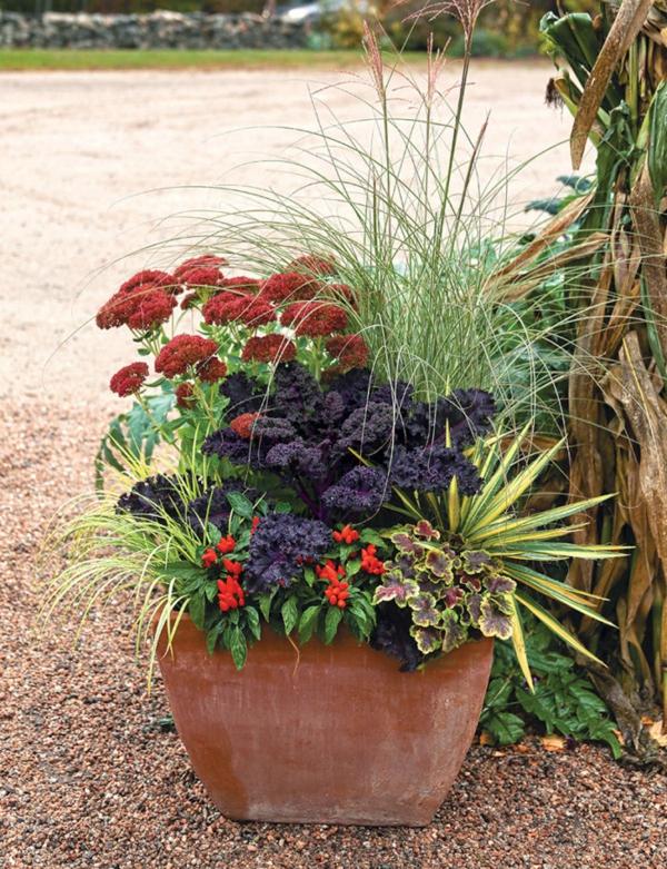 herbstbepflanzung welche pflanzen kombinieren tipps ideen