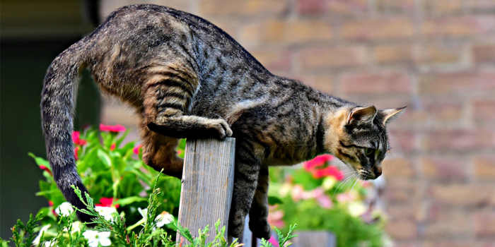 katzenschreck katzen aus dem garten vertreiben katzen fern halten