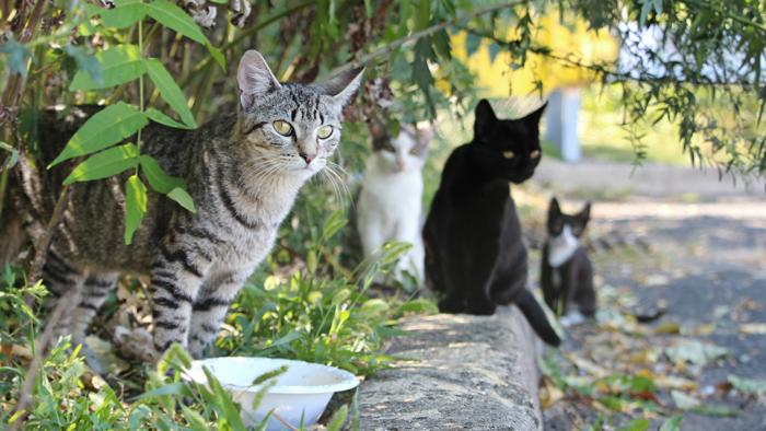 katzenschreck katzen aus dem garten vertreiben mittel tierfreundlich