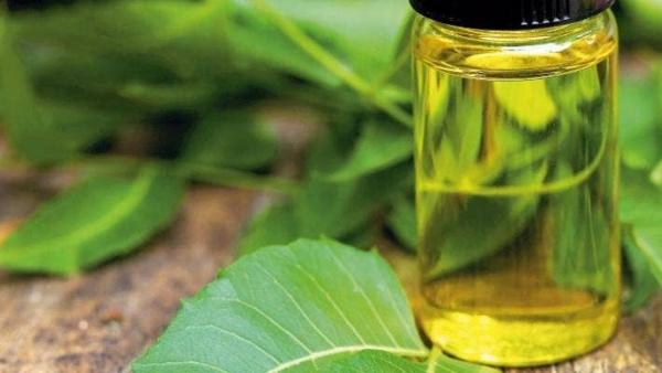 neemöl gegen grasmilben