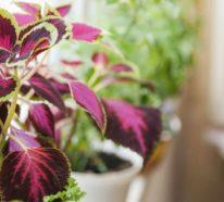 Pflanzen überwintern – 6 Tipps für das Überwintern von Topfpflanzen