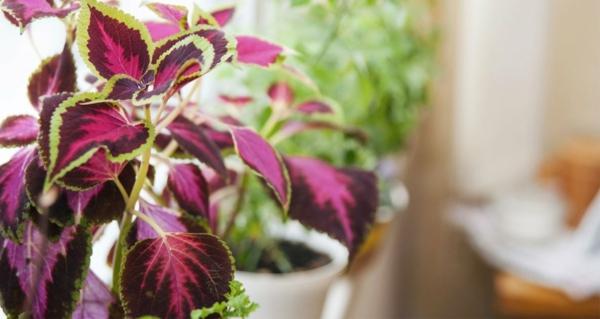 pflanzen überwintern einen passenden ort wählen lange pflanzenfreude haben