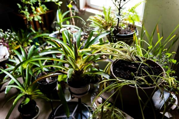 pflanzen überwintern topfpflanzen richtig überwintern tipps