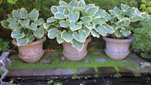 pflanzen überwintern topfpflanzen richtig überwintern tipps und tricks