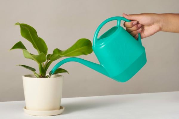 pflanzen überwintern topfpflanzen richtig gießen winter