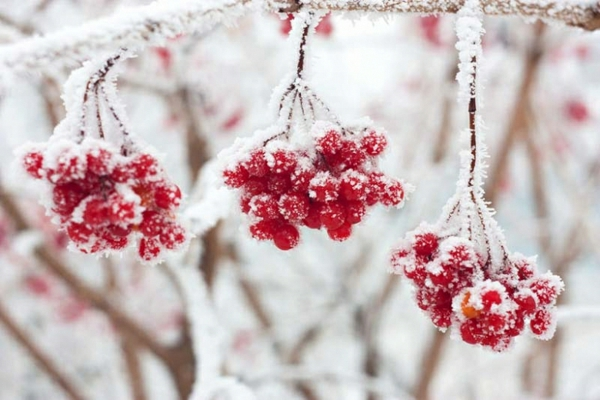 pflanzen überwintern welche pflanzen sind winterhart welche winterfest