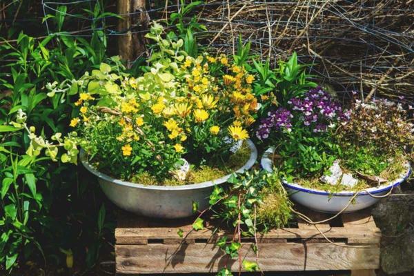 pflanzen überwintern welche pflege brauchen topfpflanzen kübelpflanzen im winter
