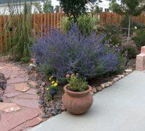 13 pflegeleichte Gartenpflanzen, die Ihren Außenbereich prächtig beleben