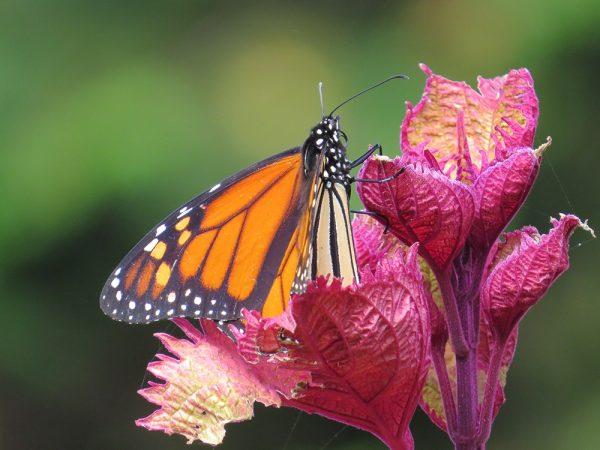 schmetterlinge trends naturgarten ideen