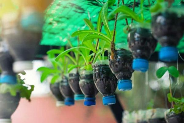 upcycling ideen garten plastikflaschen pflanzenbehälter