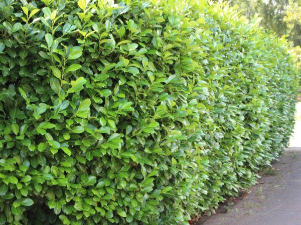 Gartengestaltung Ideen Garten Trends