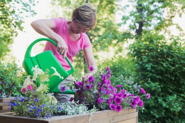 Petunien überwintern Pflege Tipps Bewässerung