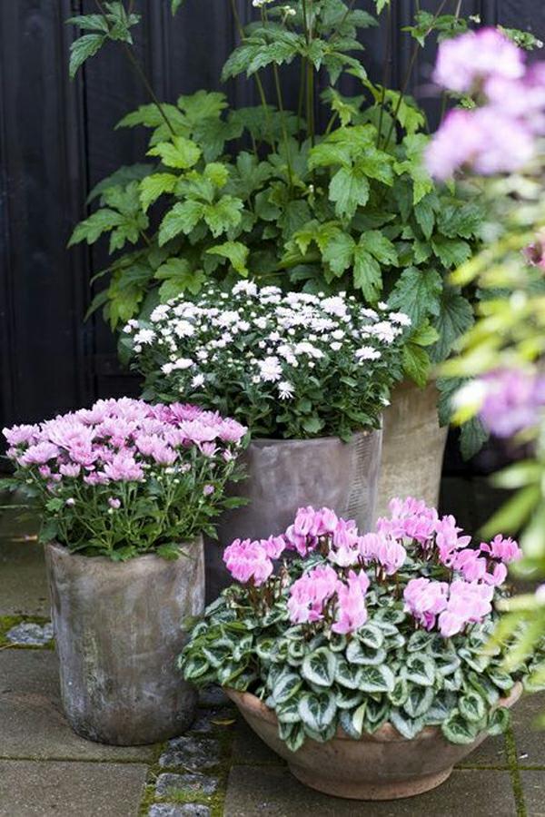 herbstdeko garten kübelpflanzen verschiedener farbe kombinieren
