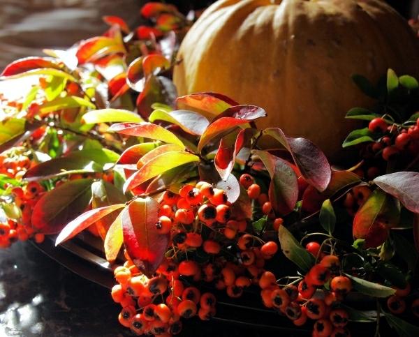 herbstdeko hagebutten kürbis schönes arrangement