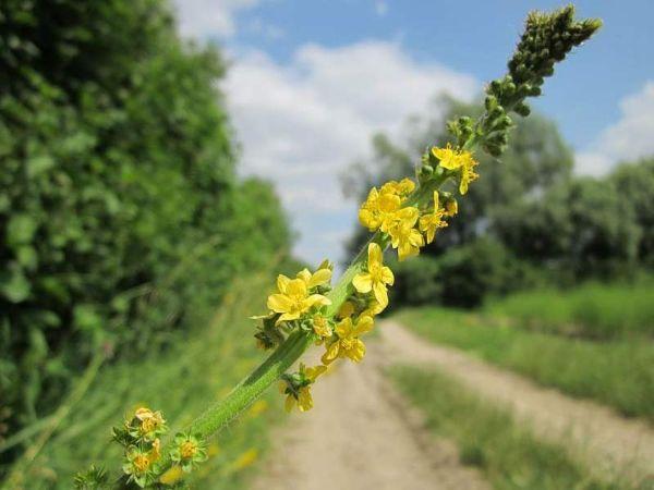 schlöner Gartenweg Naturheilkunde